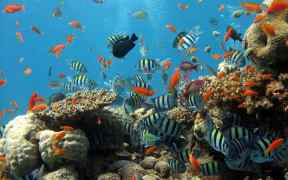 LAND PROXIMITY DETERMINES CORAL REEF RESILIENCE