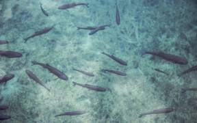 Fisheries Ministers Risking Sustainability