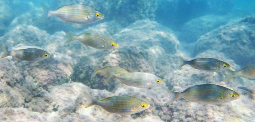 CLIMATE CHANGE SHIFTING FISHERIES PRODUCTIVITY
