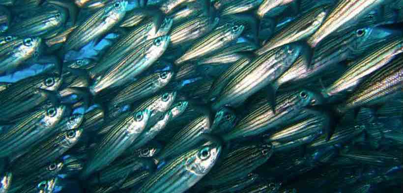 ADAPTIVE FISHERIES STRATEGIES WILL REAP DIVIDENDS