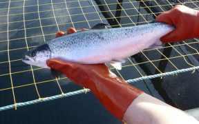 NAFC FISH WELFARE COURSE GOES GLOBAL