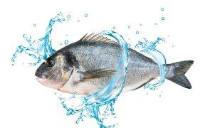 Innovative New Seabream Feed