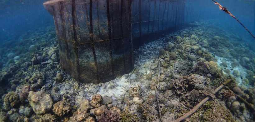 FISH FENCES CAUSING HUGE DAMAGE