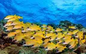 TINY FISH FUEL CORAL REEFS