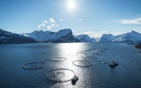 MODERATE GROWTH IN NORWEGIAN SEAFOOD EXPORTS