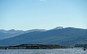 SCOTTISH SALMON RECLAIMS TOP SPOT