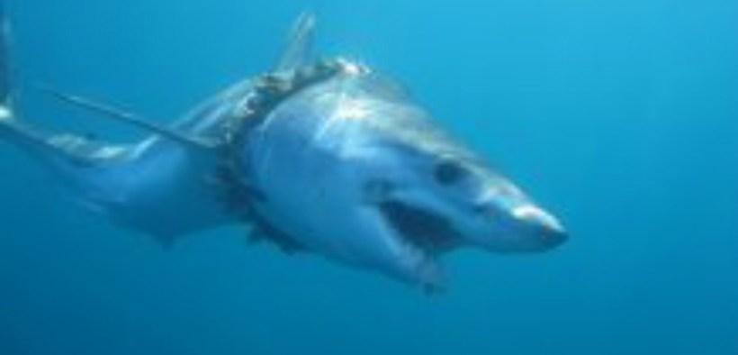 HUNDREDS OF SHARKS AND RAYS