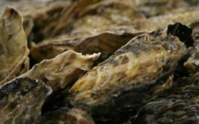 OYSTER SANCTUARY
