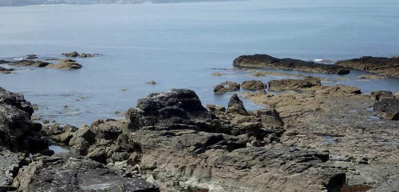 deadly-sea-worm-discovered-off-britains-coastline