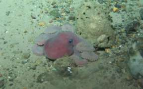 ROV-ING IRELAND'S OFFSHORE REEF