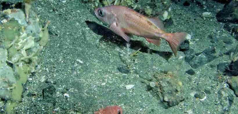 VULNERABILITY OF BERING SEA 1