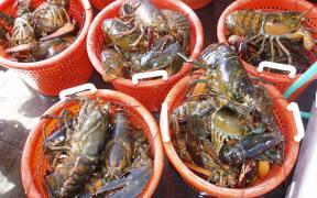Nova Scotia Lobster Fishery