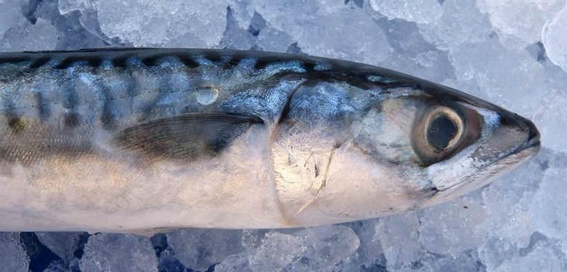 irish-fishermen-welcome-mackerel-quota-boost