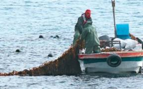 KOREAN SEAWEED FARM ACHIEVES