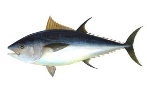 CALL FOR TUNA COMMISSION