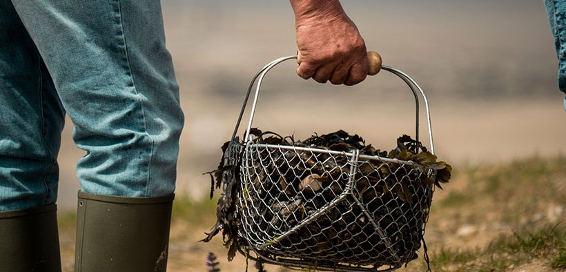 Zero emissions research for mussel farming