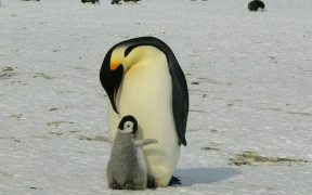 FoS launches project to conserve penguins