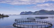 Salmon farms achieve best environmental performance