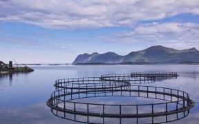 Salmon farms achieve best environmental performance