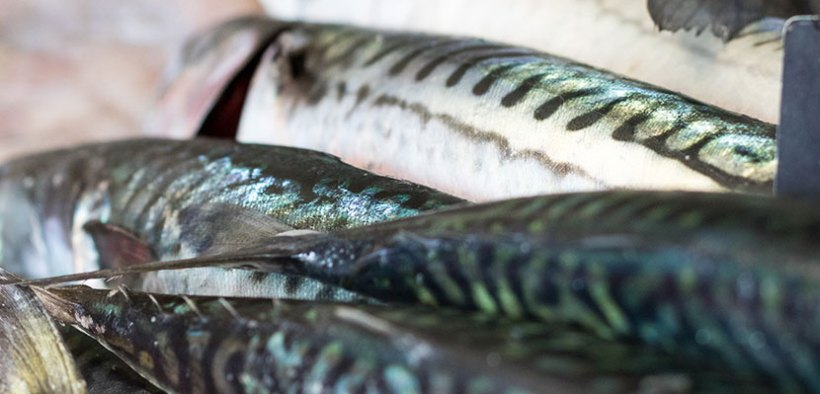 Seafood fund seeks ideas for innovation projects up to £250k