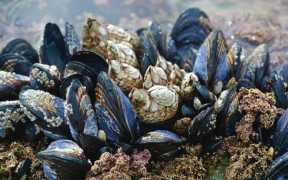 SHELLFISH GROWERS