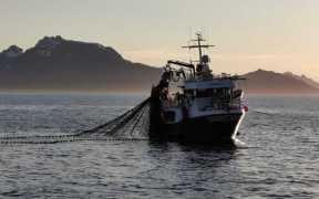 NORWEGIAN SANDEEL FISHERY COMES