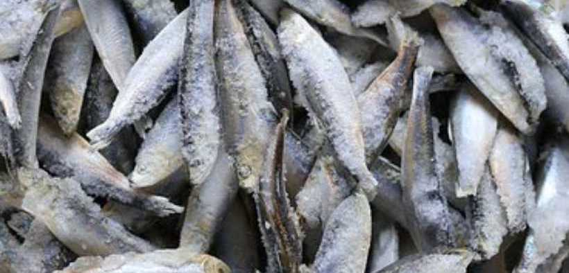 RUSSIAN FROZEN FISH PRICES REMAIN