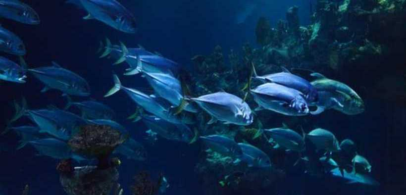 TROPICAL AND TEMPERATE REEFS