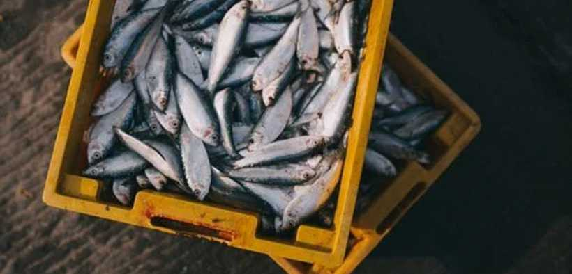 NEW SEAFOOD TRACEABILITY PROGRAMME