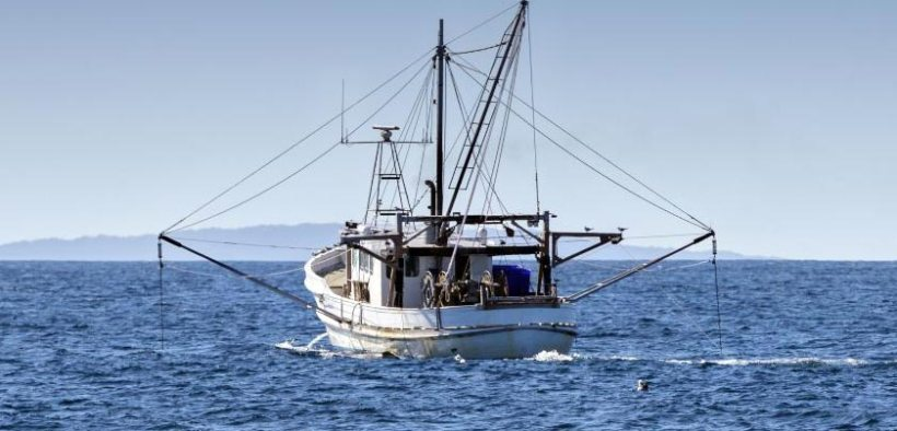 Australian seafood given sustainability tick for seventh consecutive year