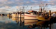 Concern over Australian fish stocks