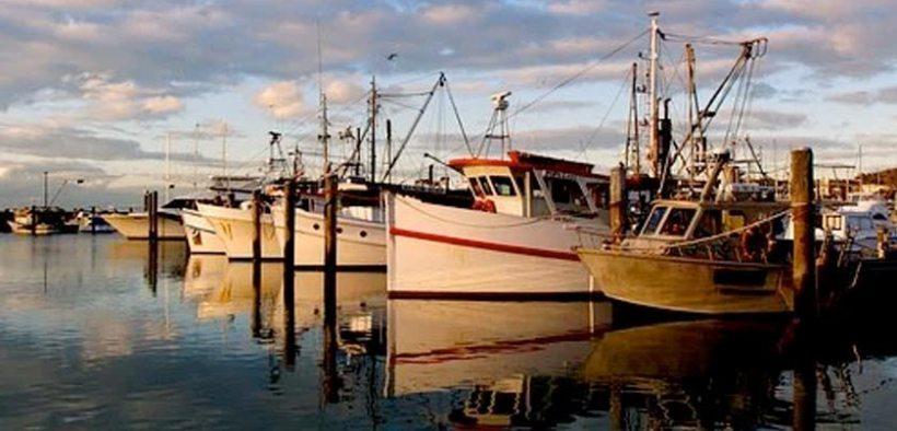 Concern over Australian fish stocks
