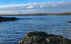 Orkney Shellfish Hatchery successfully cultures Native Flat Oysters on land