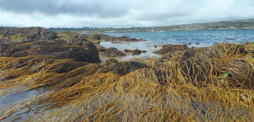 SBIR contracts awarded to develop new ways of assessing seaweed