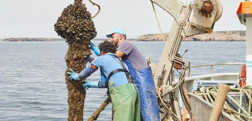 Two ASC firsts for Portuguese mussel famer