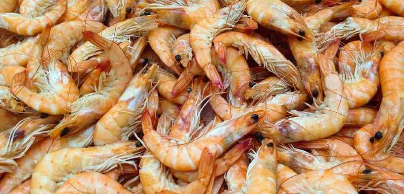 the-shrimp-industry-elevating-its-performance-globally