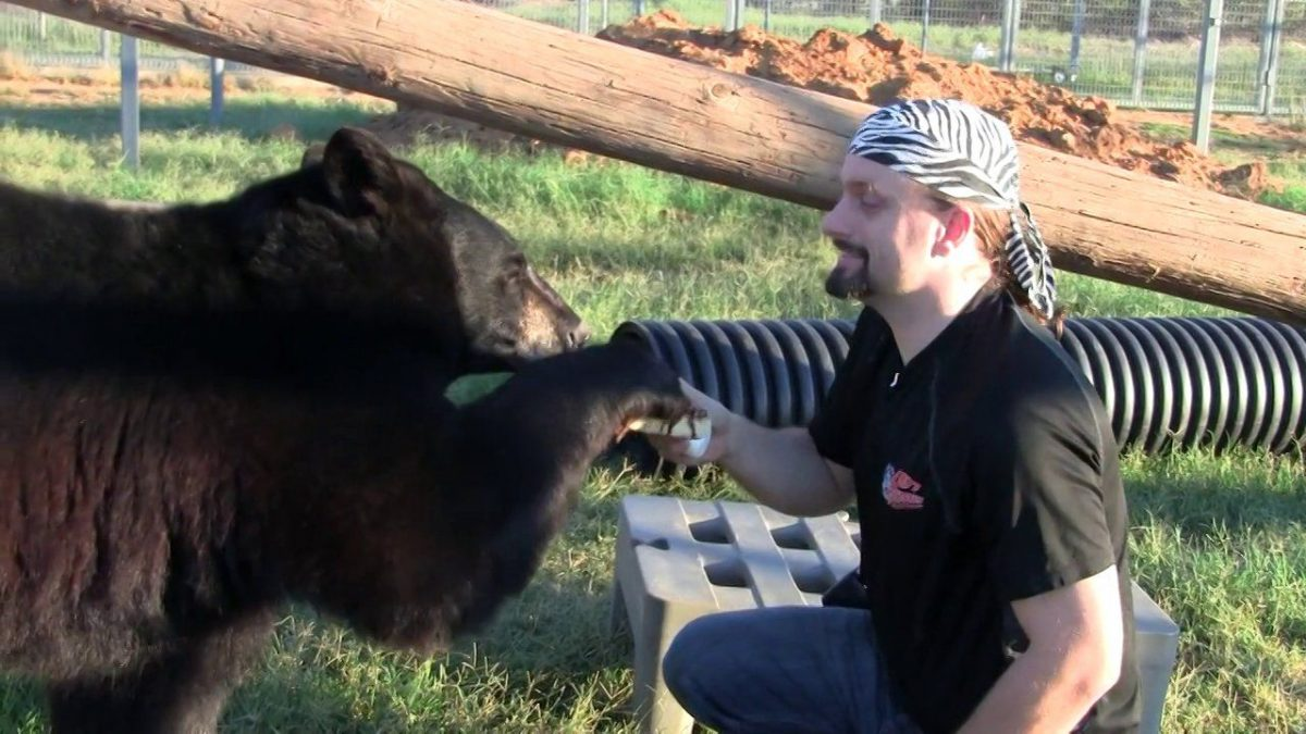 There are no tame bears (video)