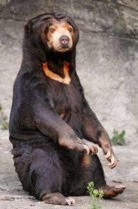 Black bear attacks on the rise? (pt. 2)