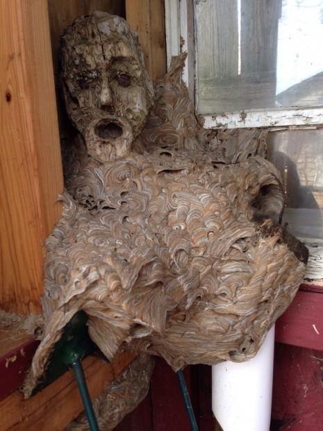 hornets-nest-465x620