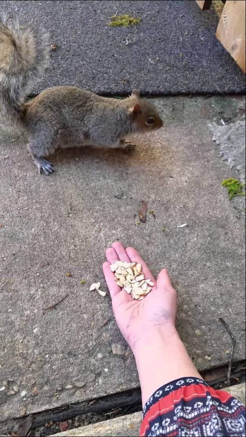 Woman's Attempt at 'Loving a Squirrel' Goes Painfully Wrong