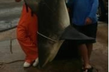 Fisherman says recent catch was largest bull shark he's seen