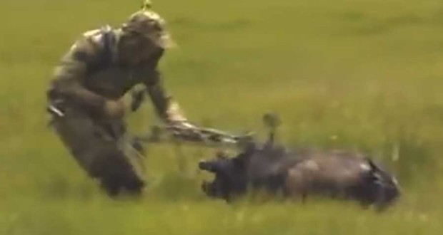 Wild Pig Hunting Going Horribly Wrong [VIDEO]