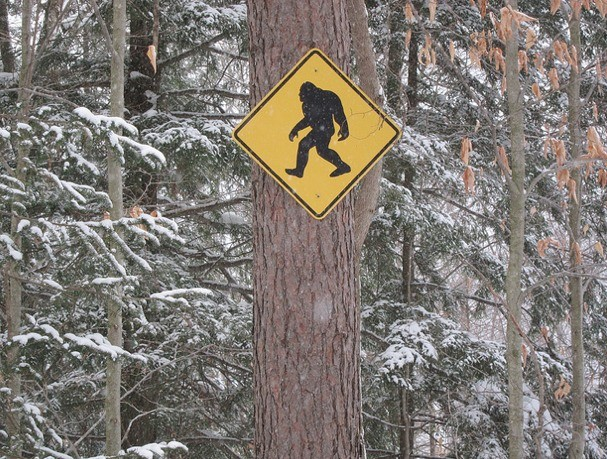 Scientists Testing for Sasquatch Actually Make a Fascinating Discovery
