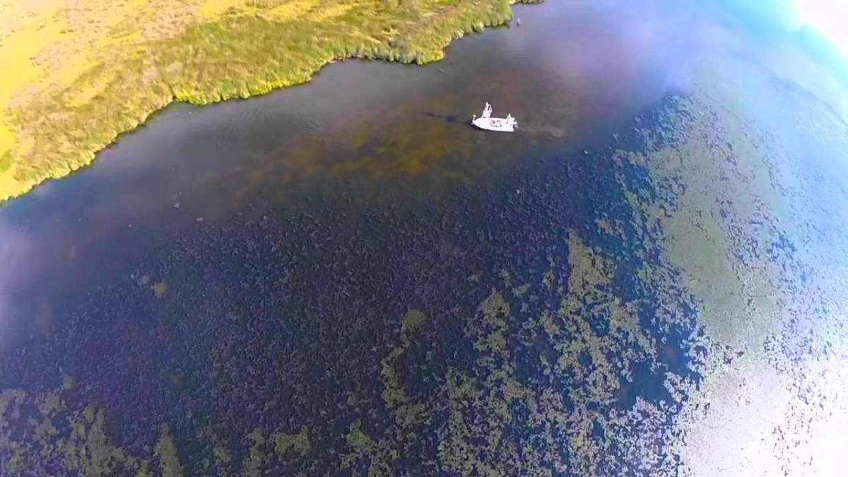 Drone gives a unique view of redfish in the shallows of a Louisiana marsh