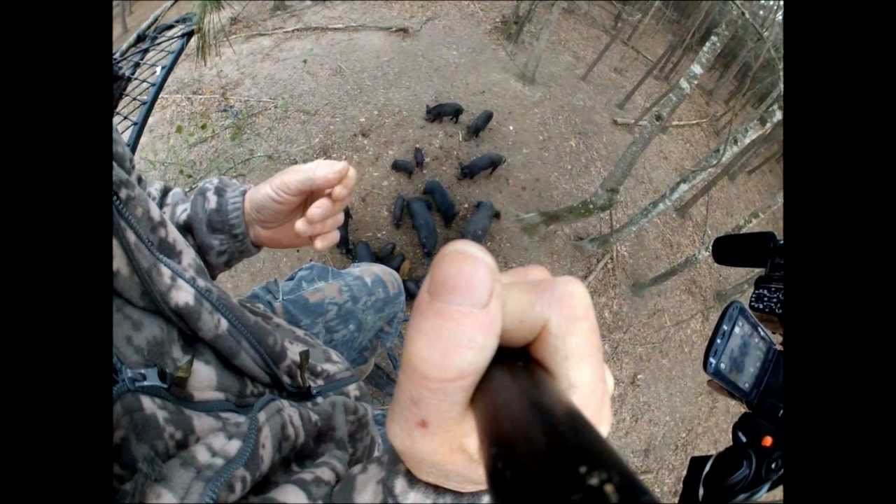 VIDEO: Hog Wild Adventures Spear Hunt With a GoPro (Graphic)