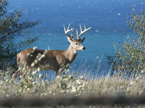 Texas parks wildlife department prospects good for deer for Texas parks and wildlife fishing report