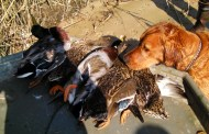 Hunting Dogs on Boats: What you Need to Know