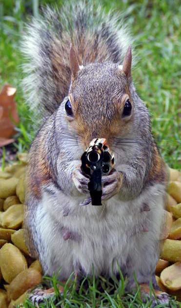 Of pistol barrels and bushy tails: Six great squirrel