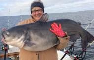 75 pound Blue Cat