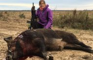 East Texas Boar